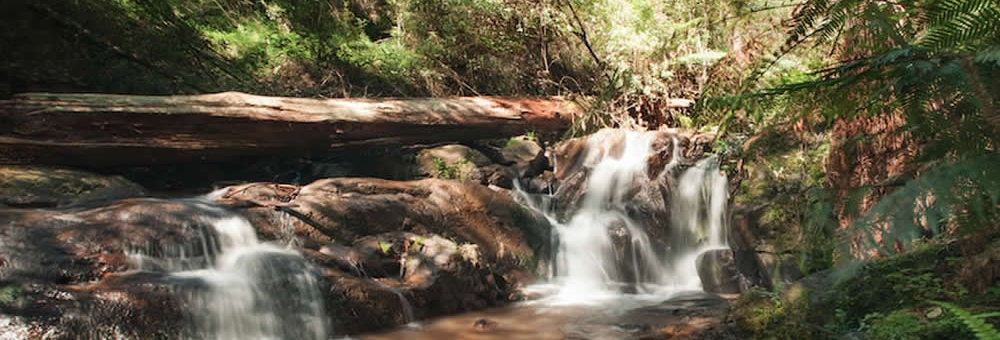 Nature & Adventure in the Dandenong Ranges